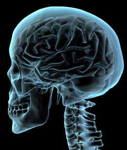 skull-brain
