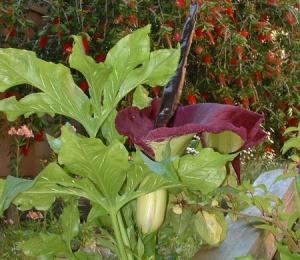 uglyflower (2)