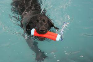 Sarge_Swimming